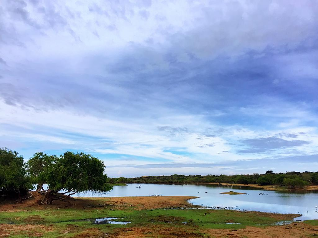 Lake, Right Outside The Cinnamon Wild, Yala, Sri Lanka.