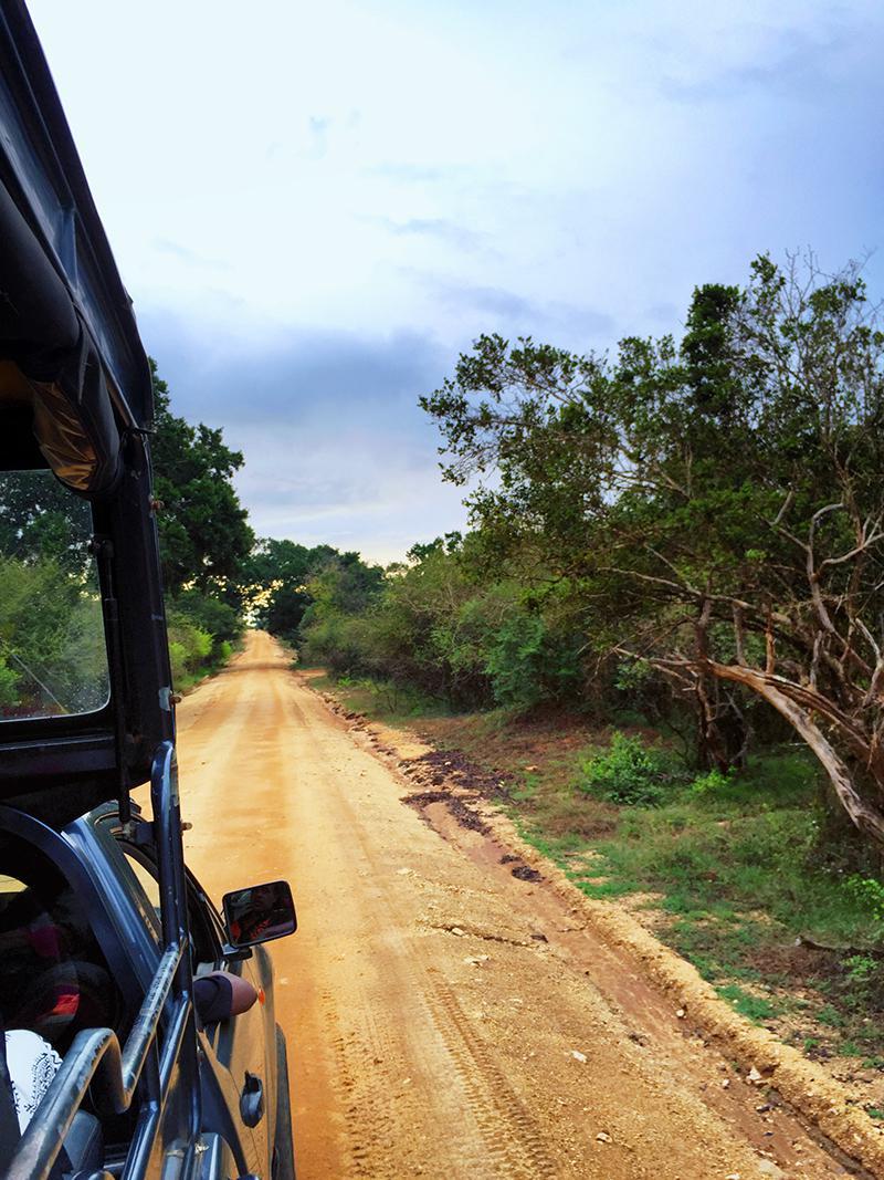 On A Safari, Yala National Park, Sri Lanka