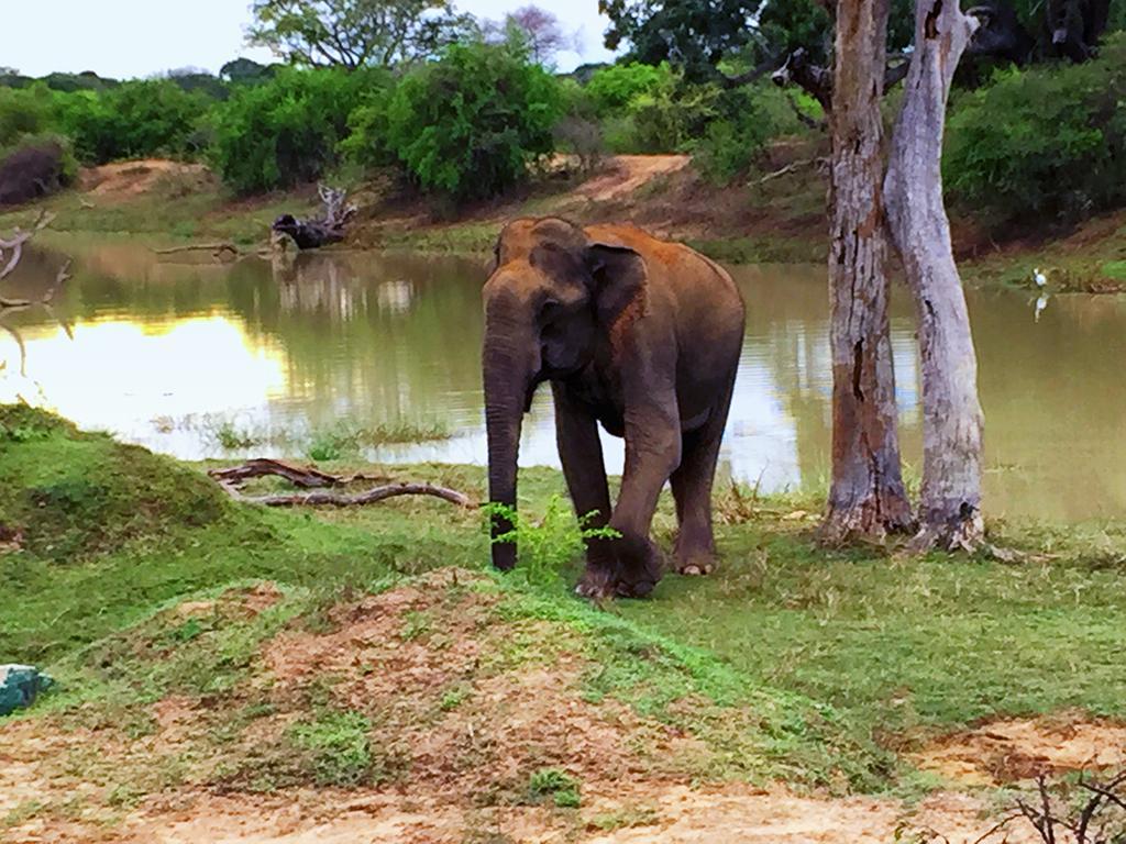 Spotting The Sri Lankan Elephant In The Wild - Yala National Park, Sri Lanka.