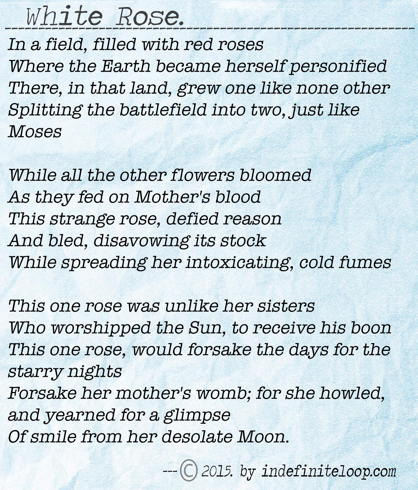 White Rose - Poem - Copyright indefiniteloop.com