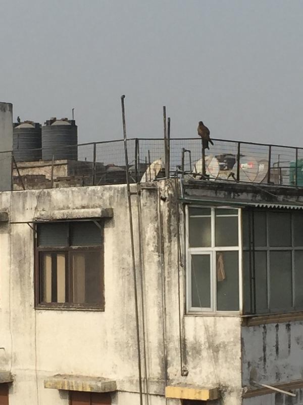 Delhi AirBnB: Anjali Grover